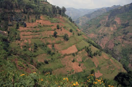 A steep hillside used for coffee growing